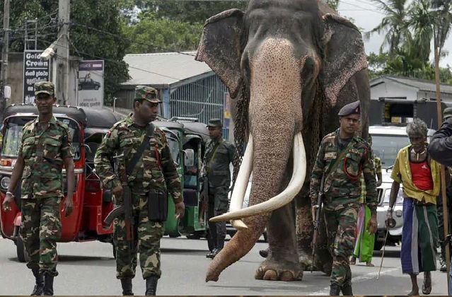65-year-old largest elephant protected
